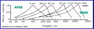 Tone frequency can be mapped onto the length of the membrane.