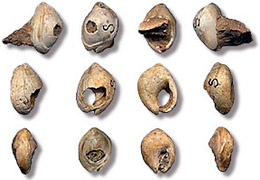 These shell beads were perforated 75K to 100K years ago.