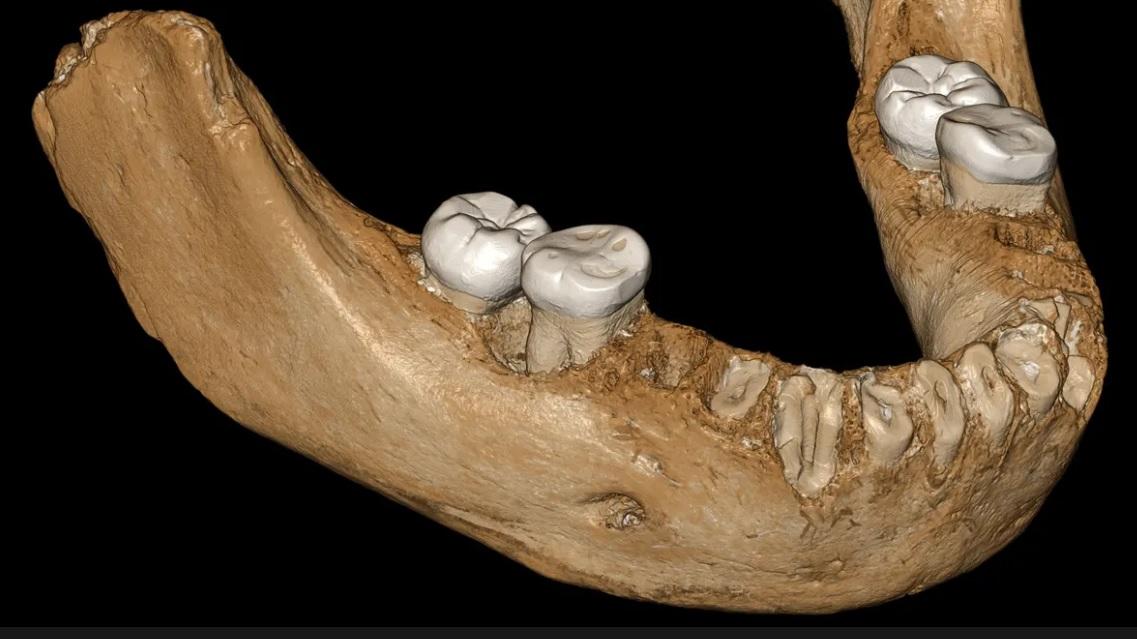 computer reconstruction of Denisovan jawbone